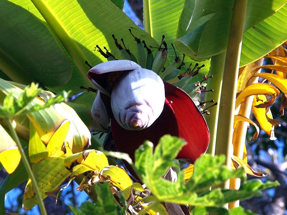 実は楽しい熱帯特有の植物観察と路地裏の猫散歩