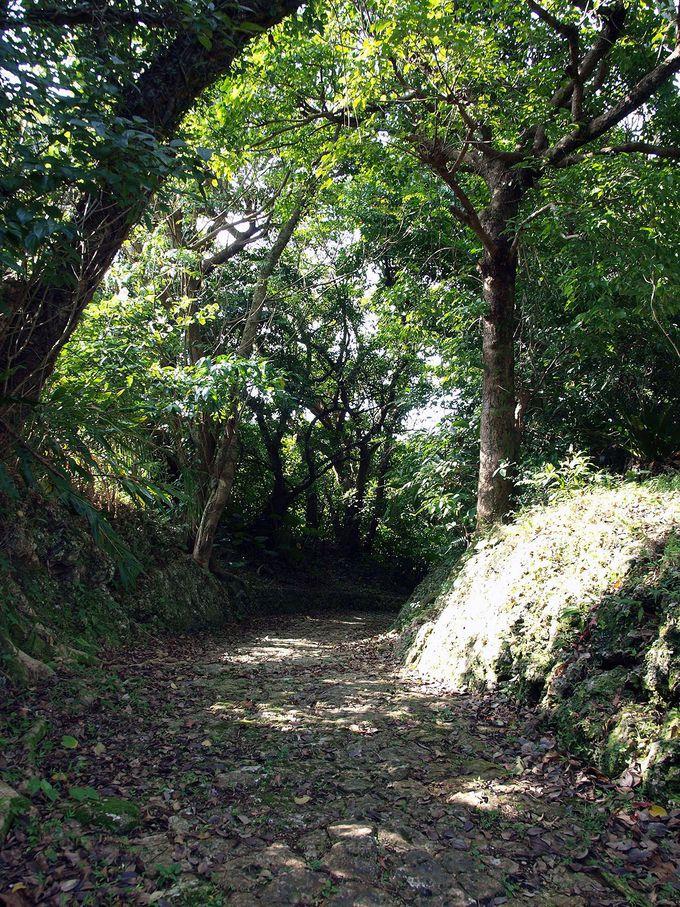 深い森に包まれた石畳の古道「ヒジガービラ」