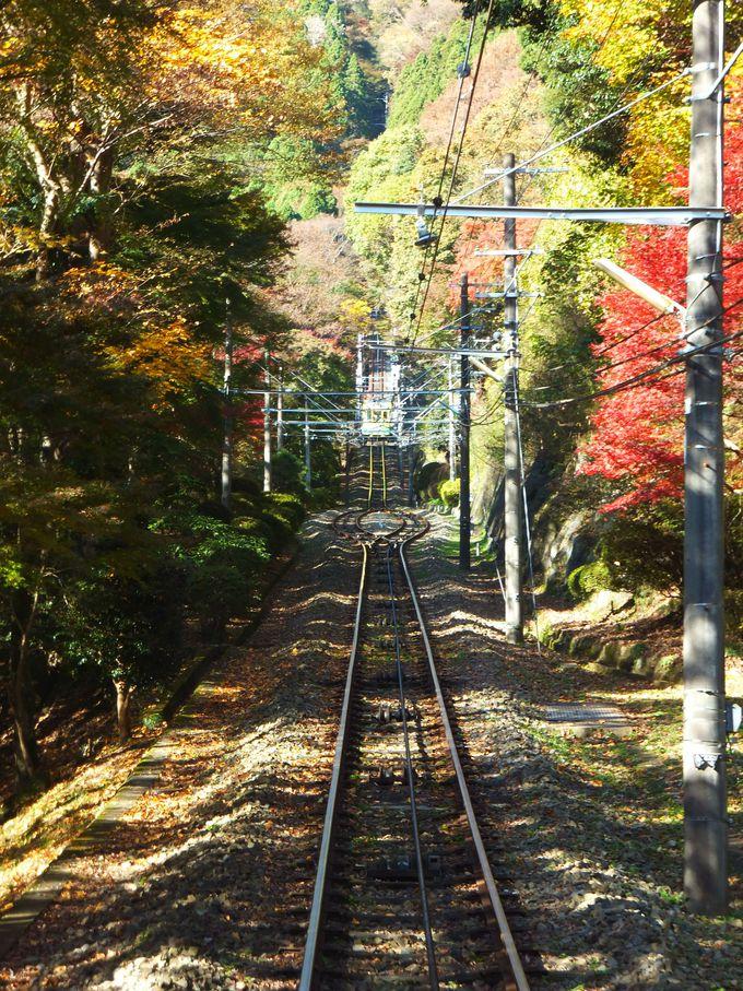 これぞ日本の秋!「高尾山」お手軽登山で美しい紅葉&富士山を満喫(東京)
