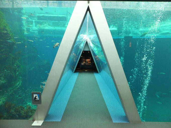 泳ぐ魚を見ながらお寿司をいただく「アクアマリンふくしま」