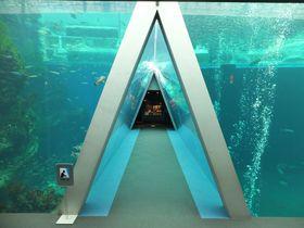 お寿司屋もある水族館!いわき市「アクアマリンふくしま」で海の世界を体感|福島県|トラベルjp<たびねす>