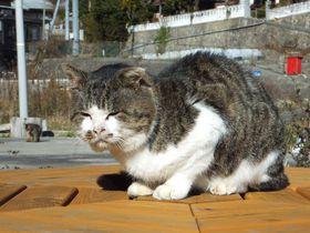 元祖・猫島の歩き方!宮城県「田代島」の猫出没スポット4選|宮城県|トラベルjp<たびねす>