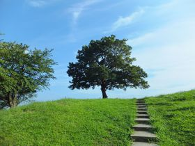 緑の丘の「ゆずの木」へ。横浜・清水ヶ丘公園はゆずっこ聖地&ロケ地のメッカ!|神奈川県|トラベルjp<たびねす>