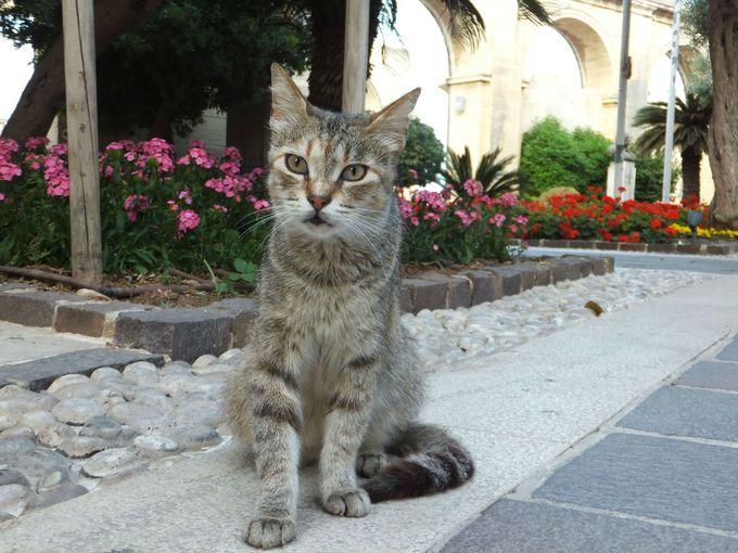 美猫率高し!島の人々に愛されている猫たち