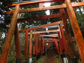 まるでジブリ映画の世界!横須賀「伏見白赤稲荷社」は山奥へ続く鳥居が神秘的な神社|神奈川県|トラベルjp<たびねす>