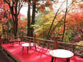 京都・高雄「神護寺」で一足早い紅葉を!紅葉を愛でながら飲むお茶は至福時間