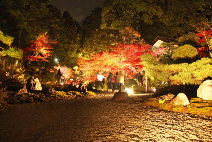 紅葉が見事な枯山水庭園「紫雲の庭」