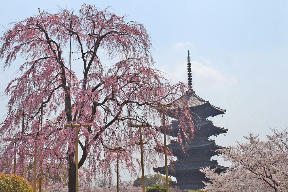 東寺のライトアップは幻想的