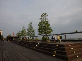 大阪国際空港の展望デッキが植物園に?!世界の珍しい植物を見ながら、飛行機の離発着も楽しんでしまおう!|大阪府|トラベルjp<たびねす>
