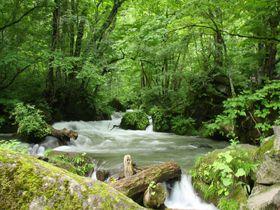 美しい散歩道「奥入瀬渓流」の美しすぎる撮影スポットベスト5!