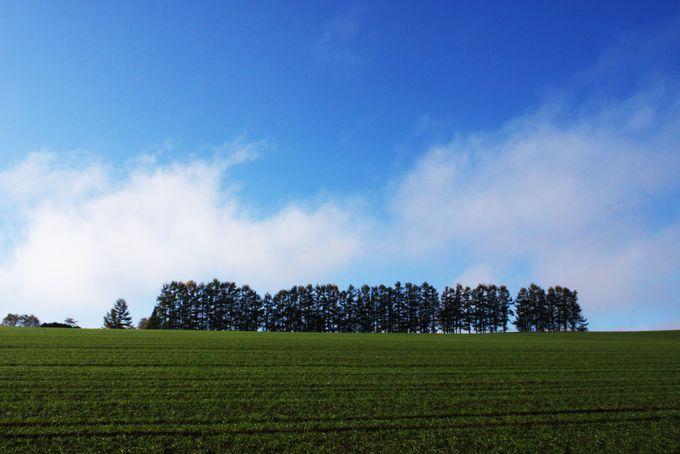 空気が澄んでいる朝がオススメ マイルドセブンの丘