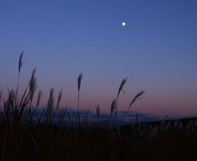 秋ならではのススキと月を
