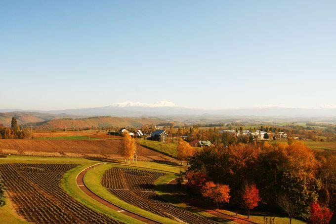 北西の丘展望公園からみる秋らしい風景