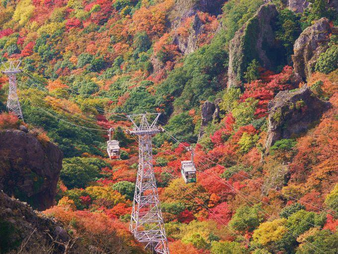 寒霞渓の深い渓谷と紅葉のコントラスト