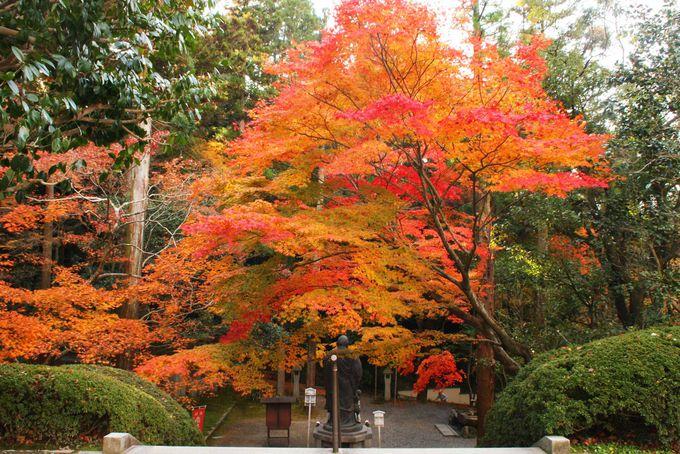 「泉涌寺」塔頭「今熊野観音寺」で弘法大師像と紅葉のコラボを