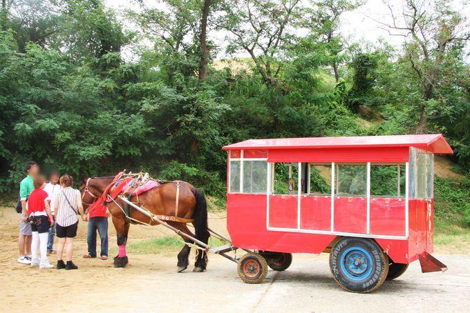 ラクダや馬車にのってのんびり観光