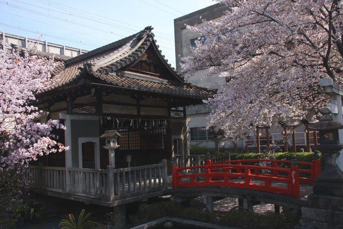 恋のかけ橋の上で桜にまみれる
