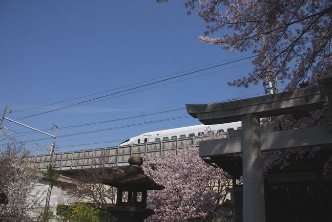 京都駅から徒歩15分:六孫王神社