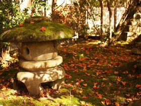 境内を覆う真っ赤な紅葉!苔むした石灯籠も美しい京都・西明寺