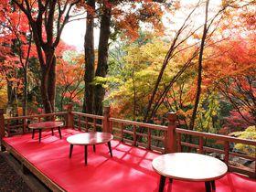 京都の一足早い紅葉は神護寺で!紅葉の下でお茶も堪能できる以外な穴場スポットとは?|京都府|トラベルjp<たびねす>