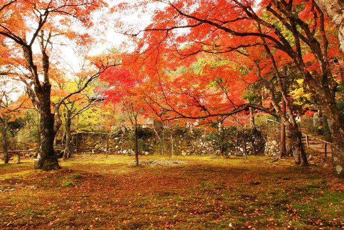 地蔵院の庭から眺める錦雲渓が絶景!