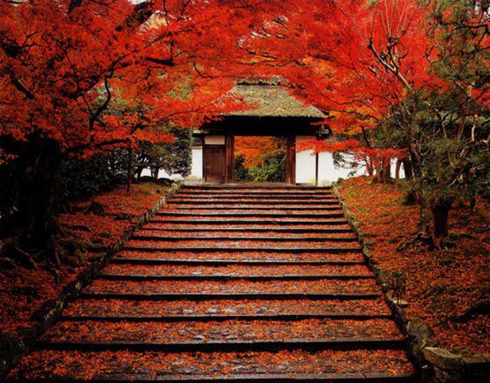京都「安楽寺」の散紅葉で真っ赤に染まる石段が美しい!寺院内のカフェは春と秋限定オープン!