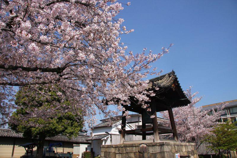 朝一でみたい京都駅周辺の桜の名所!東寺は桜降る境内の散策がおススメ