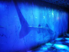 地上14階の深海の世界?!ホテル ユニバーサル ポートのポートディープオーシャンフロア|大阪府|トラベルjp<たびねす>