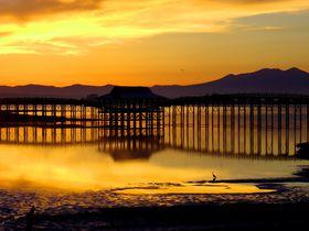 まるで鶴が湖面を舞っているような橋!青森・鶴の舞橋は日本一の木造三連太鼓橋