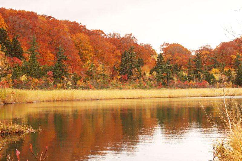 沼に映る深紅のモミジが美しい紅葉散歩!秋田八幡平・大沼自然研究路