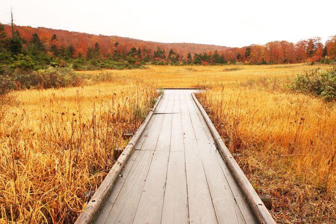 気軽に紅葉狩りができる大沼自然研究路