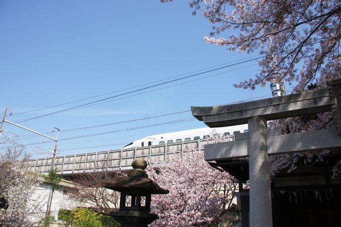 六孫王神社は新幹線とのコラボ写真が撮れる!