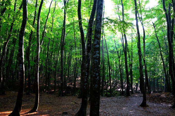 光降りそそぐ幻想的な光景!十日町市の「美人林」