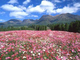 国立公園内で1泊1万円!大分「久住高原荘」は天然温泉付きの国民宿舎|大分県|トラベルjp<たびねす>