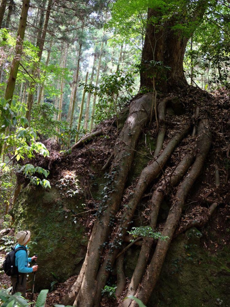 岩場の下には苔むす森が!