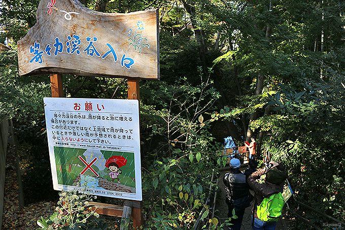 東京の名勝「等々力渓谷」