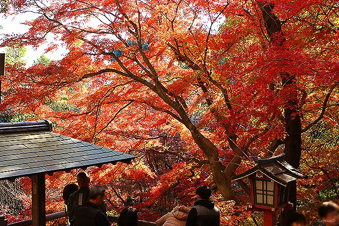 東京23区内唯一の渓谷「等々力渓谷」でリフレッシュ