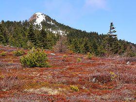 日本百名山 長野「四阿山」登頂!ハイジがいそうな広大な牧場と360度の絶景山歩き|長野県|トラベルjp<たびねす>