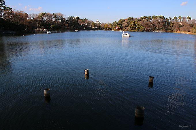 ボートにも乗れる洗足池
