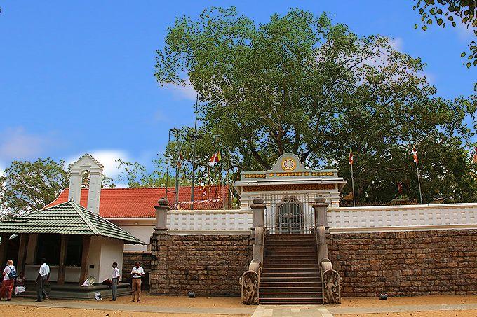 スリ・マハ菩提樹