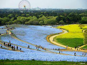 爽快サイクリング!茨城「国営ひたち海浜公園」を自転車で周遊