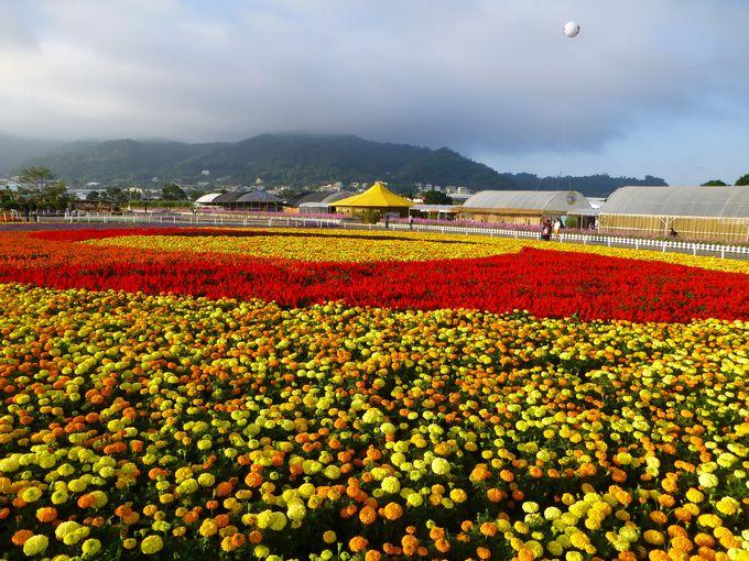 台湾で10年以上続く「花海」