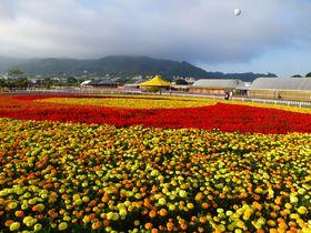 台湾台中「新社花海」は山奥一面の花畑!2017年のテーマは台3線