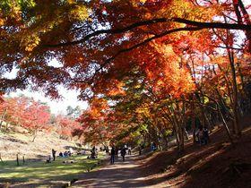 修善寺もみじまつりで紅葉堪能!色彩溢れる「もみじ林」と幻想的な「虹の郷 もみじライトアップ」