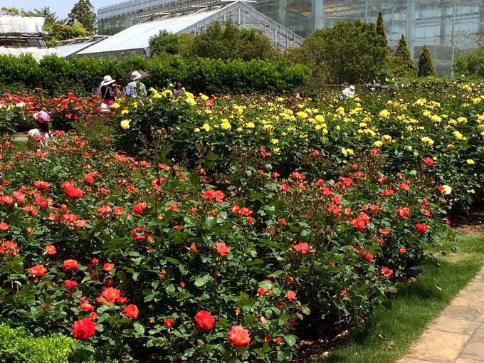四季折々の花も要チェック!園内は見どころがいっぱい