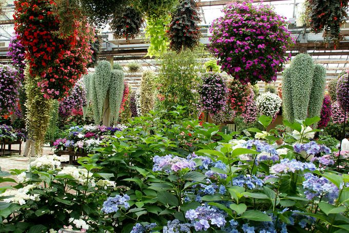 「展示温室」で豪華に花を楽しもう!