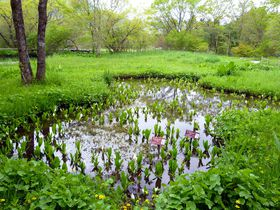 約2万株のミズバショウは圧巻!日本初の湿生植物園「箱根湿生花園」|神奈川県|トラベルjp<たびねす>