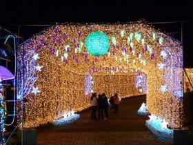 噴水イルミネーションは日本最大級!「はままつフルーツパーク時之栖」に輝く300万球の光
