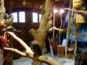 フクロウとふれあえるモモンガ専門店!浜松・ぬくもりの森「福蔵」で過ごす癒しの時間