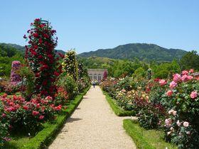 ここは18世紀フランス!?春の伊豆「河津バガテル公園」はバラと名園が凄い|静岡県|トラベルjp<たびねす>